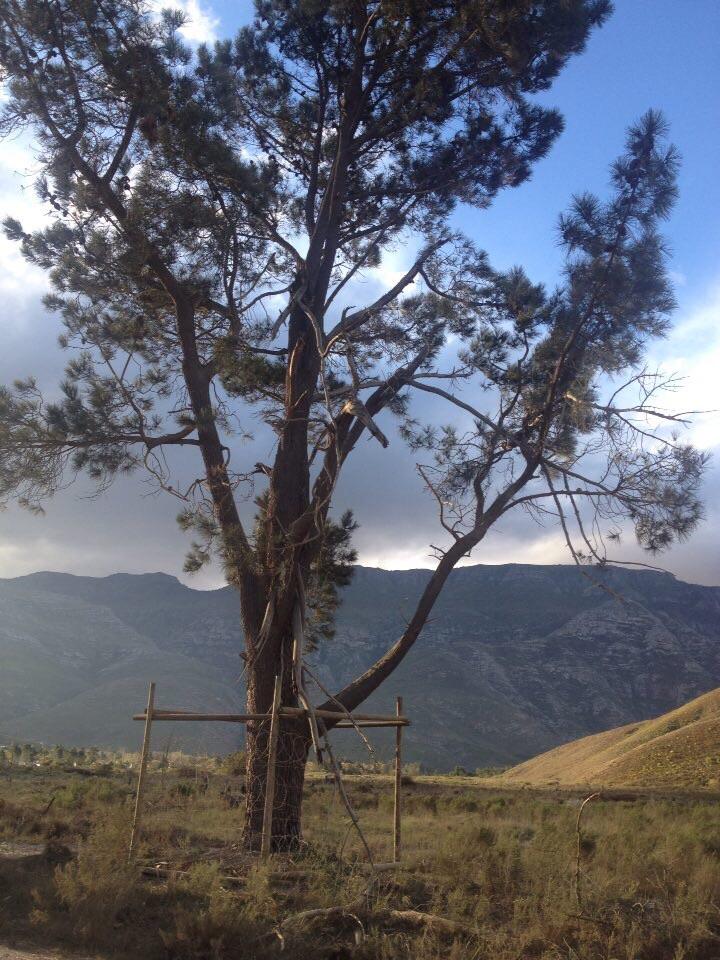 Foto bij Natuurbehoud