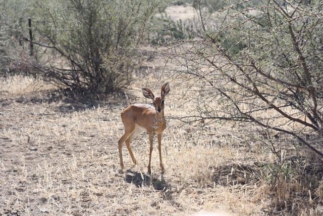 Foto bij Bambi