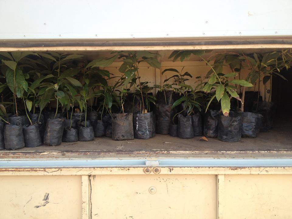 Foto bij Planting trees