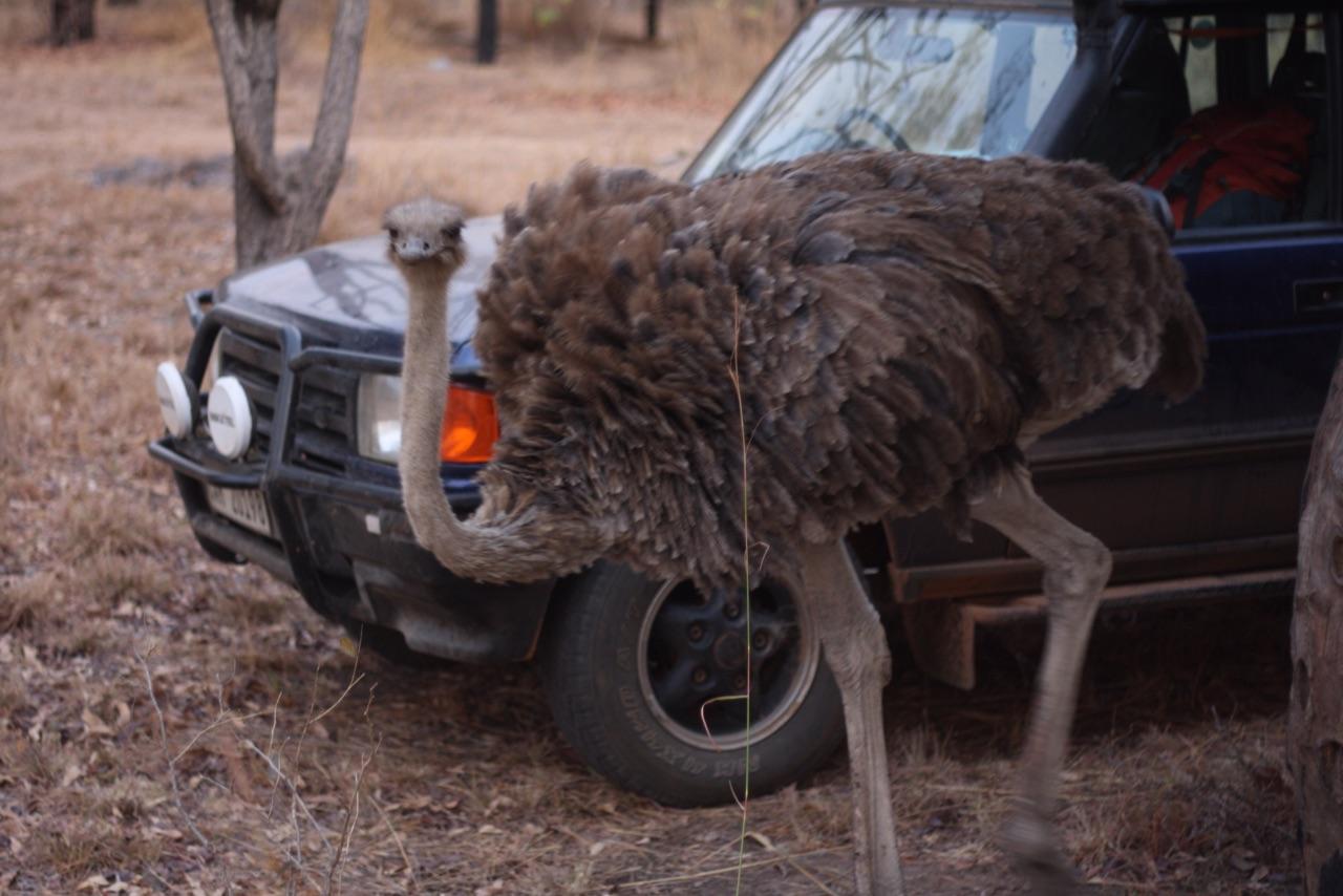 Foto bij Landy | Kuti Wild Life Reserve