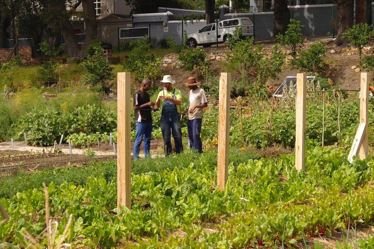 Foto bij Oranjezicht City Farm