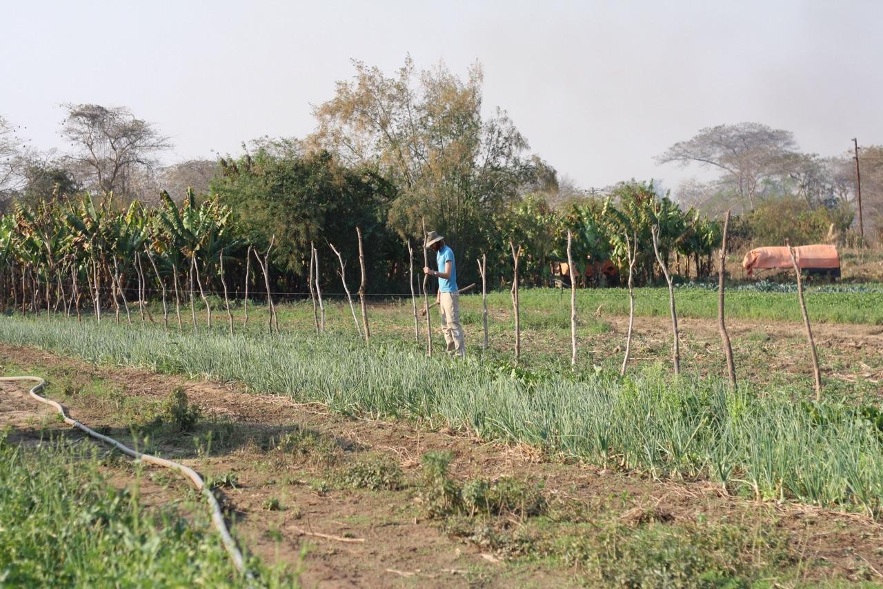Foto bij Seb's farm