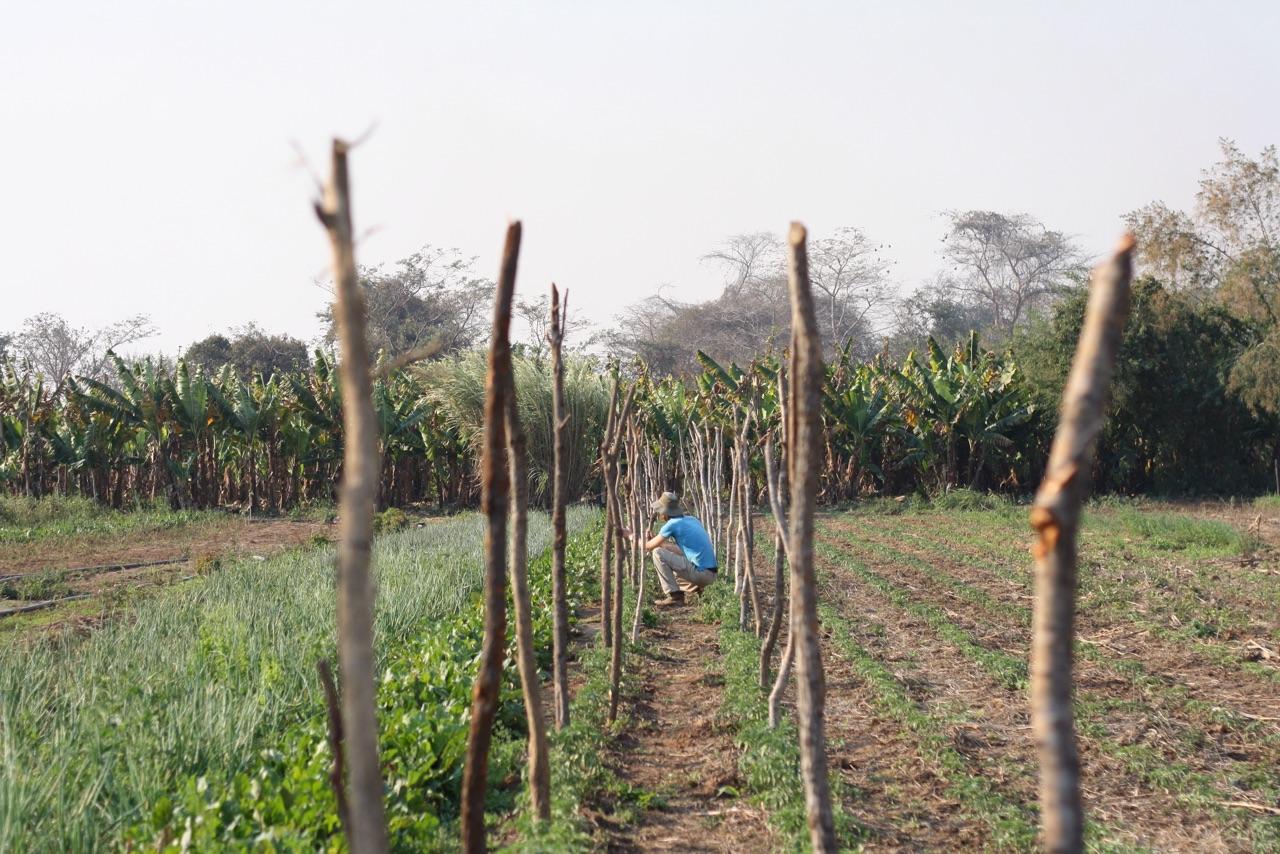 Foto bij Werken op Sebs farm