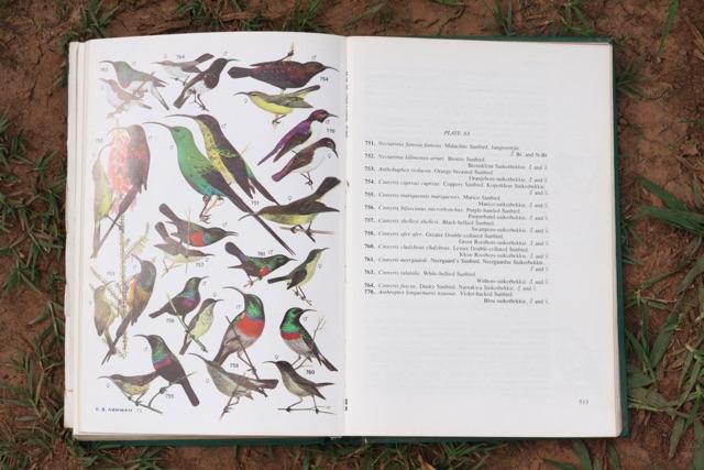 Foto bij Greyton Ecolodge | Vogels